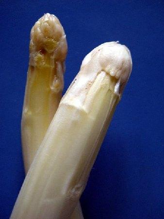 Spargel (Asparagus)